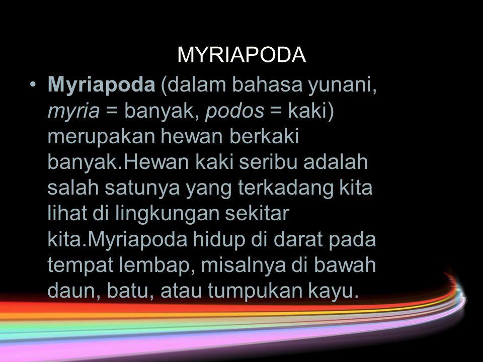 MYRIAPODA Myriapoda (dalam bahasa yunani, myria = banyak, podos = kaki) merupakan hewan berkaki banyak.Hewan kaki seribu adalah salah satunya yang terkadang kita lihat di lingkungan sekitar kita.Myriapoda hidup di darat pada tempat lembap, misalnya di bawah daun, batu, atau tumpukan kayu.