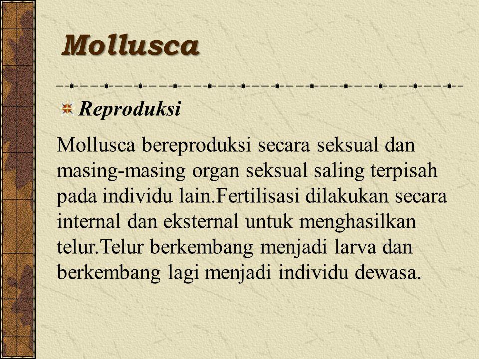 Mollusca Reproduksi Mollusca bereproduksi secara seksual dan masing-masing organ seksual saling terpisah pada individu lain.Fertilisasi dilakukan secara internal dan eksternal untuk menghasilkan telur.Telur berkembang menjadi larva dan berkembang lagi menjadi individu dewasa.