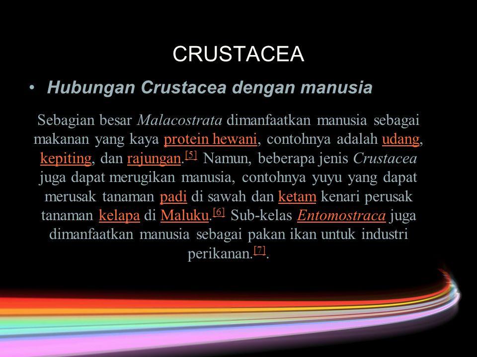 CRUSTACEA Hubungan Crustacea dengan manusiaHubungan Crustacea dengan manusia Sebagian besar Malacostrata dimanfaatkan manusia sebagai makanan yang kaya protein hewani, contohnya adalah udang, kepiting, dan rajungan.
