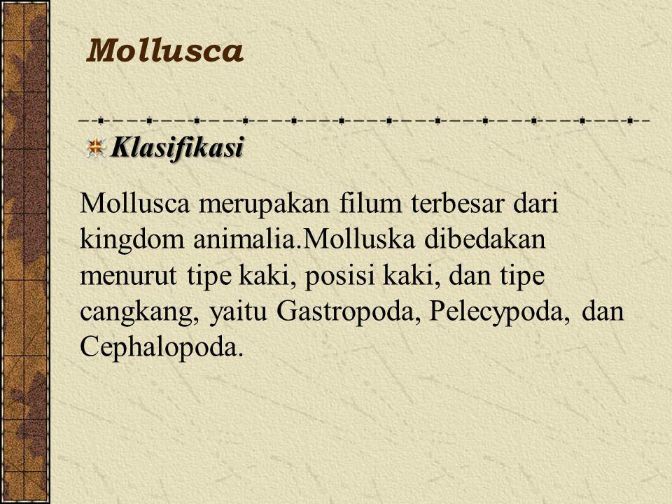 Mollusca Klasifikasi Mollusca merupakan filum terbesar dari kingdom animalia.Molluska dibedakan menurut tipe kaki, posisi kaki, dan tipe cangkang, yaitu Gastropoda, Pelecypoda, dan Cephalopoda.