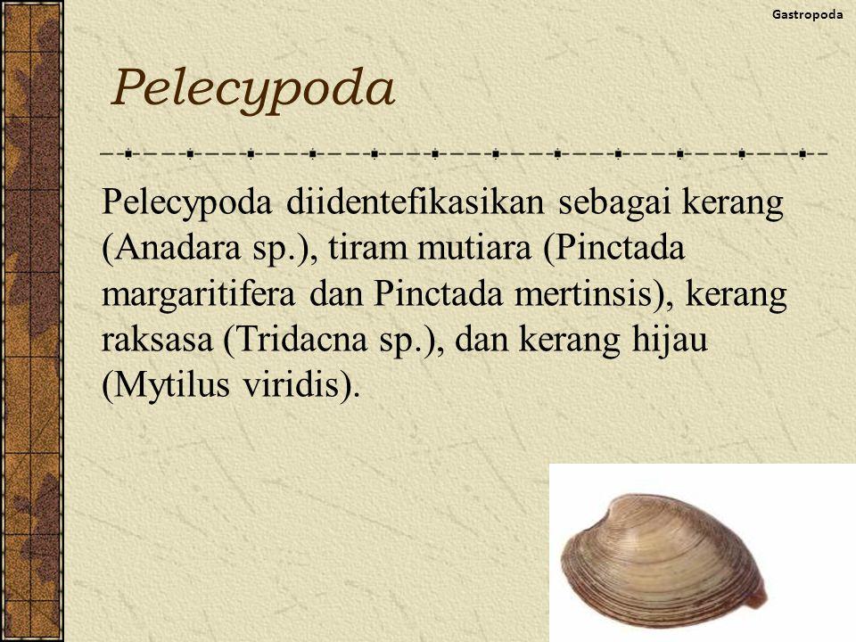 Pelecypoda Gastropoda Pelecypoda diidentefikasikan sebagai kerang (Anadara sp.), tiram mutiara (Pinctada margaritifera dan Pinctada mertinsis), kerang raksasa (Tridacna sp.), dan kerang hijau (Mytilus viridis).