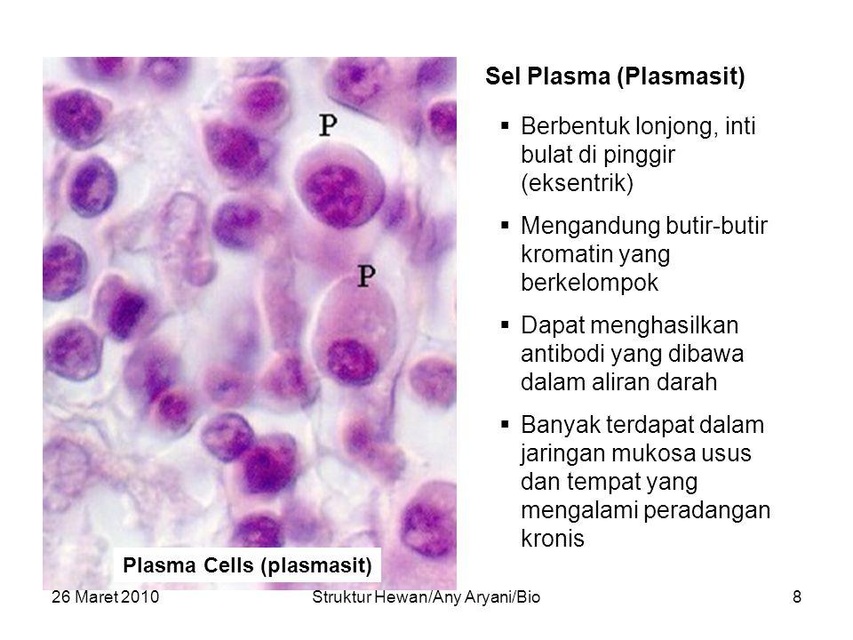 26 Maret 2010Struktur Hewan/Any Aryani/Bio8 Plasma Cells (plasmasit) Sel Plasma (Plasmasit)  Berbentuk lonjong, inti bulat di pinggir (eksentrik)  M
