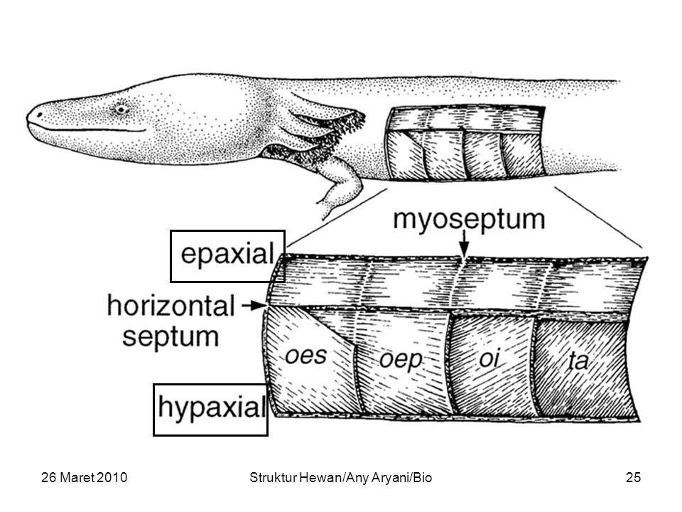 26 Maret 2010Struktur Hewan/Any Aryani/Bio25