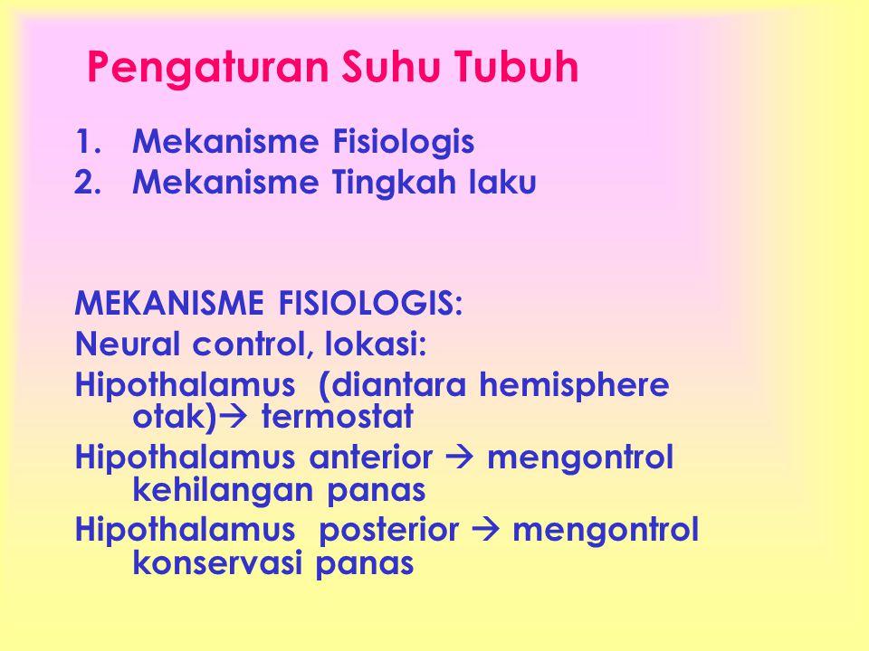 Pengaturan Suhu Tubuh 1.Mekanisme Fisiologis 2.Mekanisme Tingkah laku MEKANISME FISIOLOGIS: Neural control, lokasi: Hipothalamus (diantara hemisphere otak)  termostat Hipothalamus anterior  mengontrol kehilangan panas Hipothalamus posterior  mengontrol konservasi panas