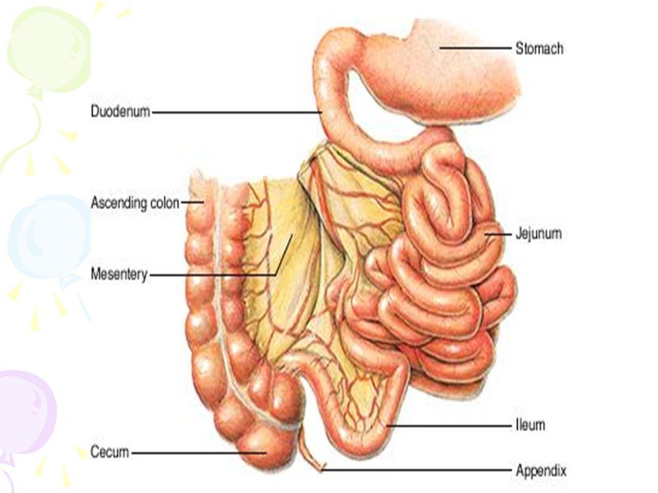 Kondisi Klinik yang mungkin terjadi : a.Anemia b.Hipotiroidisme c.Dialisa ginjal d.Pembedahan abdomen e.Paralisis f.Cedera spinal cord g.Immobilisasi yang lama Tujuan yang diharapkan : 1.Pasien kembali ke pola BAB normal 2.Terjadi perubahan pola hidup untuk menurunkan faktor penyebab konstipasi