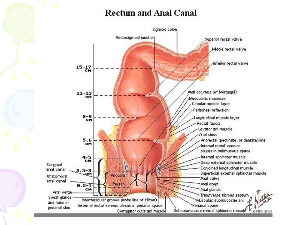 Proses Defekasi Proses pembuangan atau pengeluaran sisa- sisa metabolisme berupa feses dan flatus yang berasal dari saluran pencernaan melalui anus Defekasi dipengaruhi 2 reflek : 1.