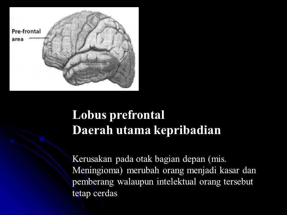 Lobus prefrontal Daerah utama kepribadian Kerusakan pada otak bagian depan (mis.