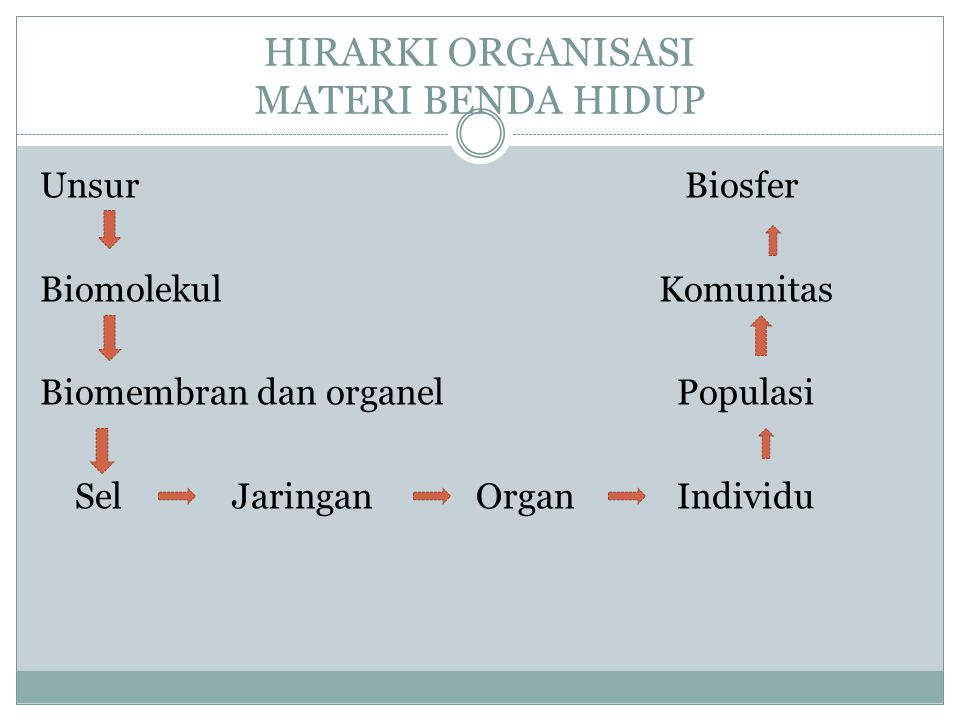 HIRARKI ORGANISASI MATERI BENDA HIDUP Unsur Biosfer Biomolekul Komunitas Biomembran dan organel Populasi SelJaringan Organ Individu