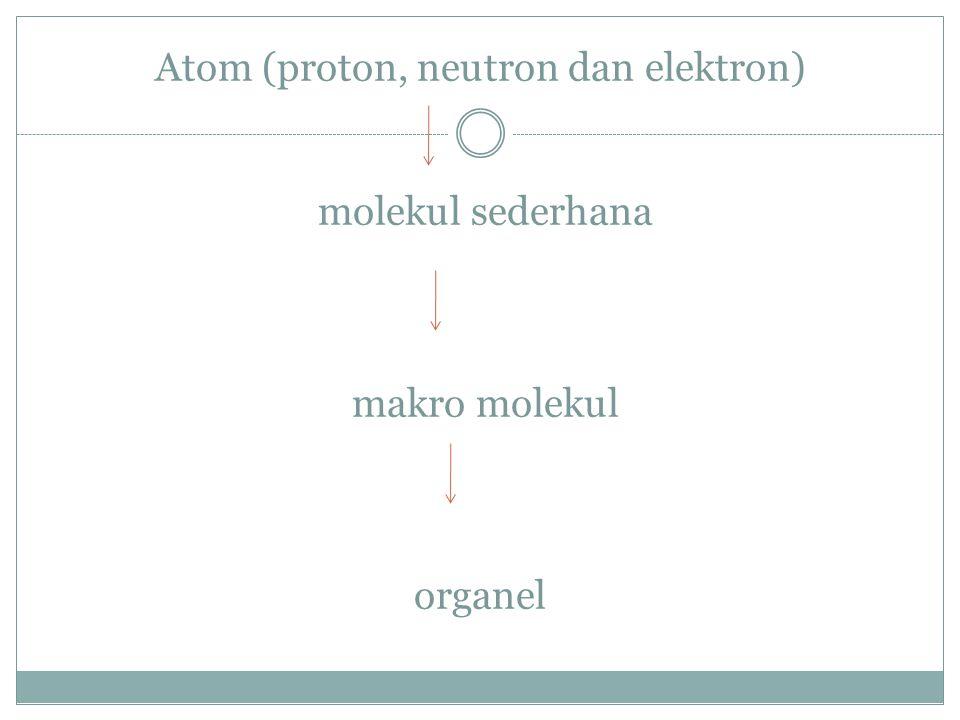 Atom (proton, neutron dan elektron) molekul sederhana makro molekul organel