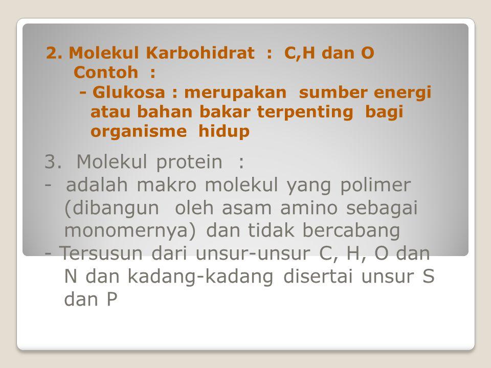 3. Molekul protein : - adalah makro molekul yang polimer (dibangun oleh asam amino sebagai monomernya) dan tidak bercabang - Tersusun dari unsur-unsur