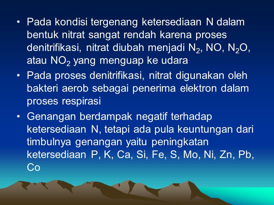 Pada kondisi tergenang ketersediaan N dalam bentuk nitrat sangat rendah karena proses denitrifikasi, nitrat diubah menjadi N 2, NO, N 2 O, atau NO 2 y