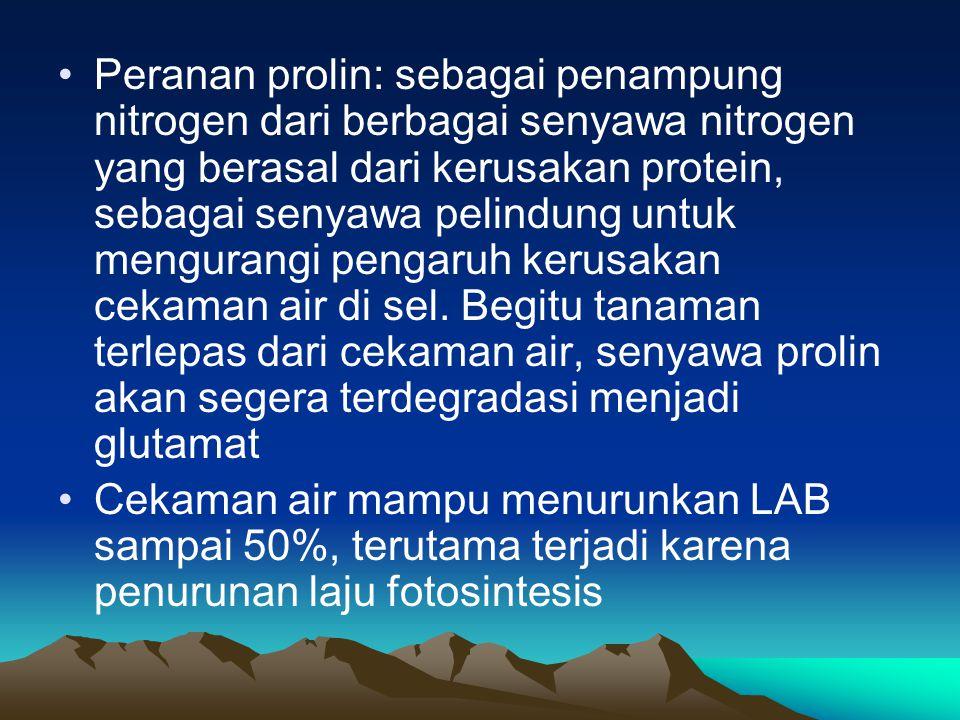 Peranan prolin: sebagai penampung nitrogen dari berbagai senyawa nitrogen yang berasal dari kerusakan protein, sebagai senyawa pelindung untuk mengura