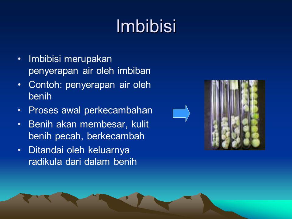 Imbibisi Imbibisi merupakan penyerapan air oleh imbiban Contoh: penyerapan air oleh benih Proses awal perkecambahan Benih akan membesar, kulit benih p