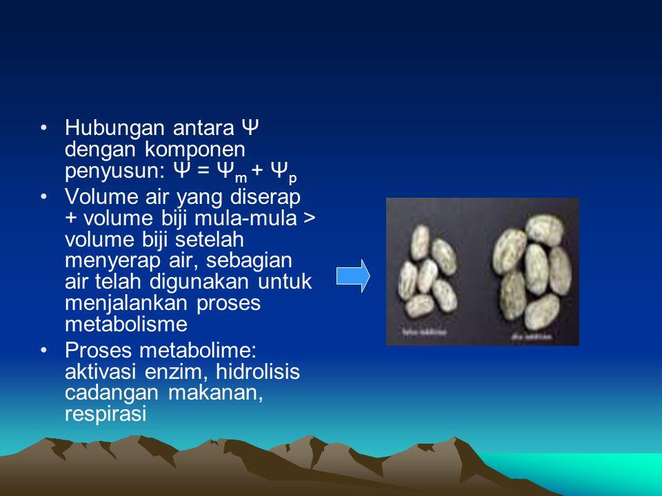 Hubungan antara Ψ dengan komponen penyusun: Ψ = Ψ m + Ψ p Volume air yang diserap + volume biji mula-mula > volume biji setelah menyerap air, sebagian