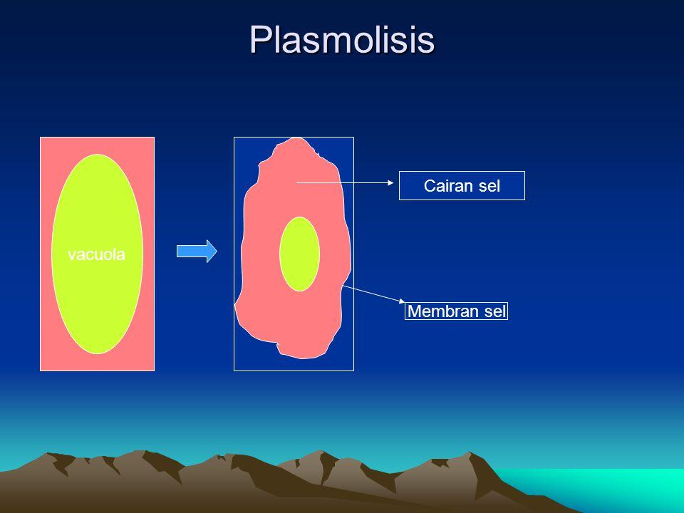 Plasmolisis vacuola Membran sel Cairan sel
