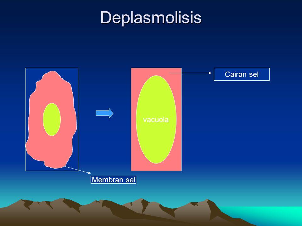 Deplasmolisis vacuola Membran sel Cairan sel