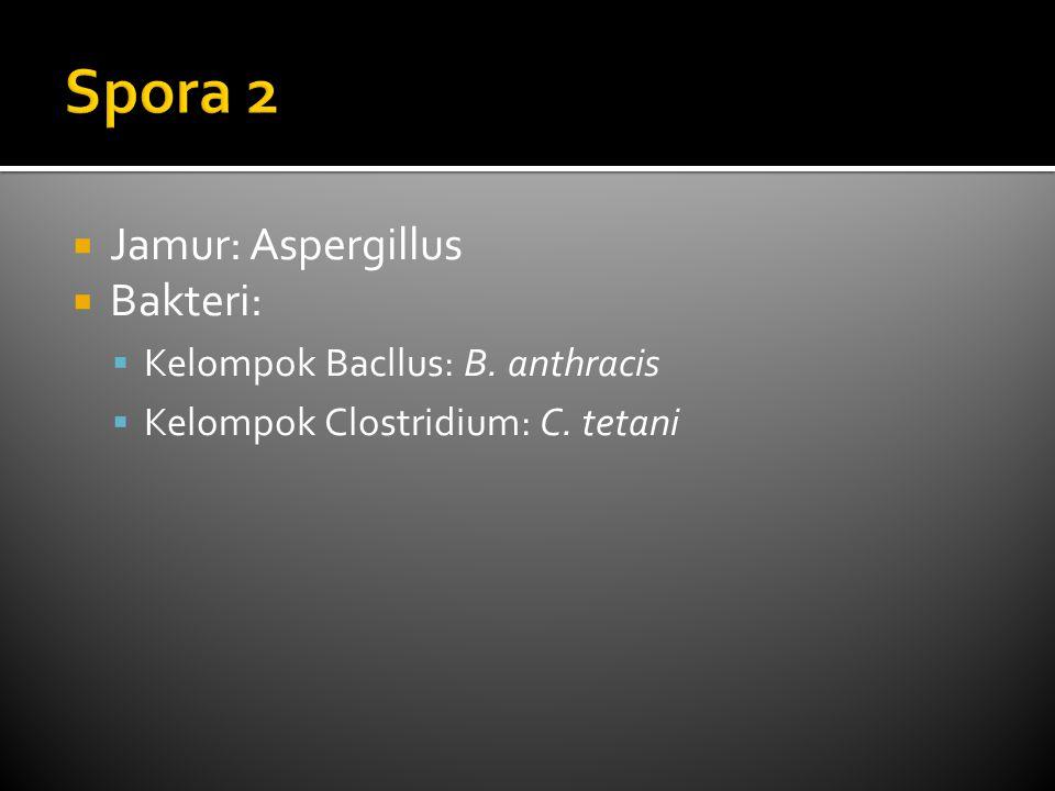  Jamur: Aspergillus  Bakteri:  Kelompok Bacllus: B. anthracis  Kelompok Clostridium: C. tetani