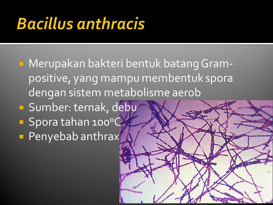  Merupakan bakteri bentuk batang Gram- positive, yang mampu membentuk spora dengan sistem metabolisme aerob  Sumber: ternak, debu  Spora tahan 100 o C  Penyebab anthrax