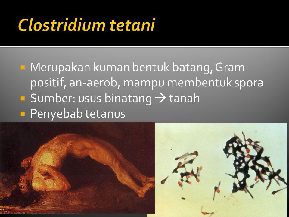 Merupakan kuman bentuk batang, Gram positif, an-aerob, mampu membentuk spora  Sumber: usus binatang  tanah  Penyebab tetanus