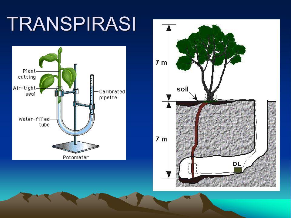 Definisi Proses hilangnya air dalam bentuk uap air dari jaringan hidup tanaman yang terletak di atas permukaan tanah melewati stomata, lubang kutikula, dan lentisel 80% air yang ditranspirasikan berjalan melewati lubang stomata, paling besar peranannya dalamtranspirasi
