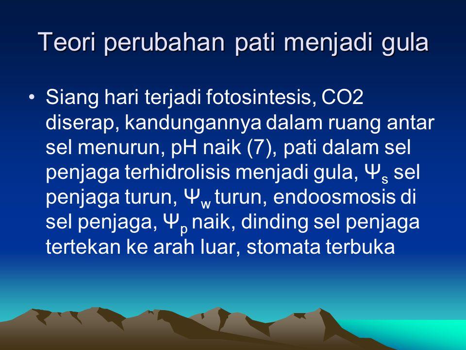 Teori perubahan pati menjadi gula Siang hari terjadi fotosintesis, CO2 diserap, kandungannya dalam ruang antar sel menurun, pH naik (7), pati dalam se