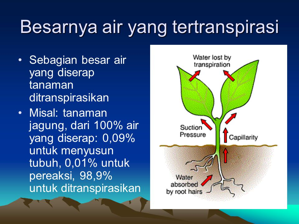 Antitranspiran Senyawa kimia yang diberikan ke pada tanaman dengan tujuan untuk menurunkan laju transpirasi Mekanisme kerja: melalui penutupan lubang stomata oleh partikel tertentu maupun dengan mendorong berlangsungnya mekanisme fisiologis yang menyebabkan stomata menutup Harganya sangat mahal dan belum ada yang efektif untuk menurunkan laju transpirasi