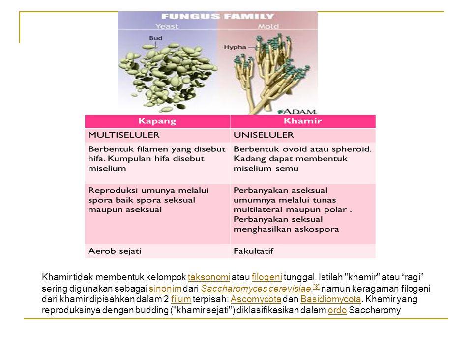 Khamir tidak membentuk kelompok taksonomi atau filogeni tunggal.