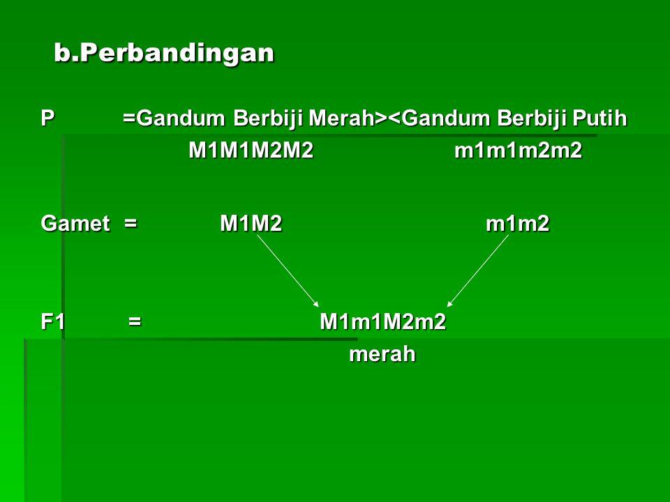 b.Perbandingan b.Perbandingan P =Gandum Berbiji Merah> <Gandum Berbiji Putih M1M1M2M2 m1m1m2m2 M1M1M2M2 m1m1m2m2 Gamet = M1M2 m1m2 F1 = M1m1M2m2 merah