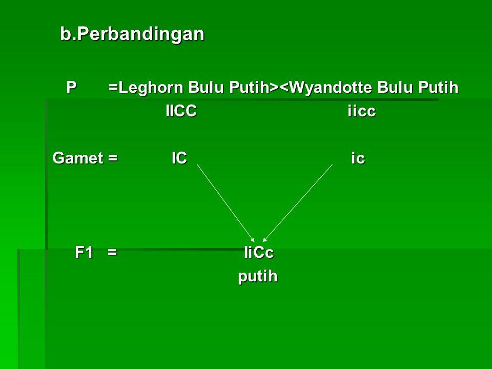 b.Perbandingan b.Perbandingan P =Leghorn Bulu Putih> <Wyandotte Bulu Putih IICC iicc IICC iicc Gamet = IC ic Gamet = IC ic F1 = IiCc F1 = IiCc putih p
