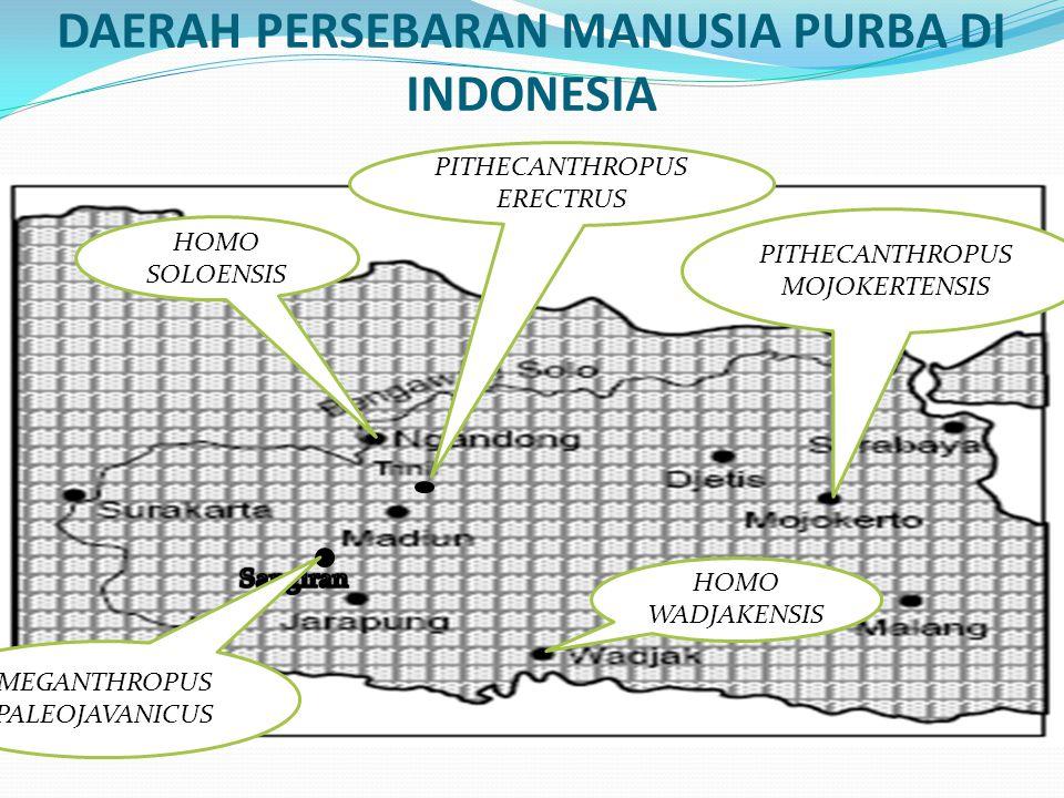 DAERAH PERSEBARAN MANUSIA PURBA DI INDONESIA PITHECANTHROPUS ERECTRUS HOMO SOLOENSIS PITHECANTHROPUS MOJOKERTENSIS HOMO WADJAKENSIS MEGANTHROPUS PALEOJAVANICUS