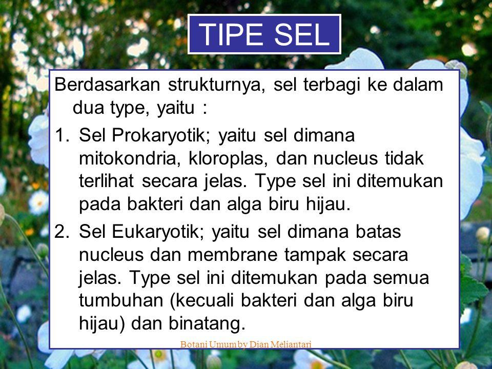 TIPE SEL Berdasarkan strukturnya, sel terbagi ke dalam dua type, yaitu : 1.Sel Prokaryotik; yaitu sel dimana mitokondria, kloroplas, dan nucleus tidak