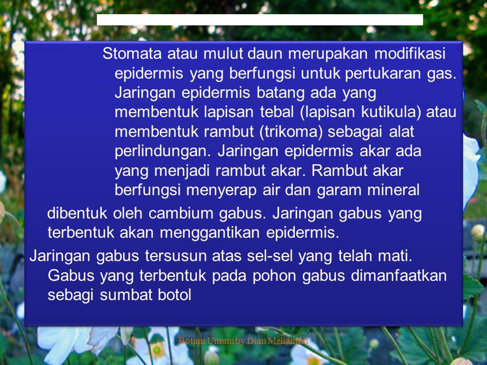 Epidermis memiliki beberapa struktur khas sbg berikut : - Stomata (mulut daun), yaitu lubang pada lapisan epidermis daun.