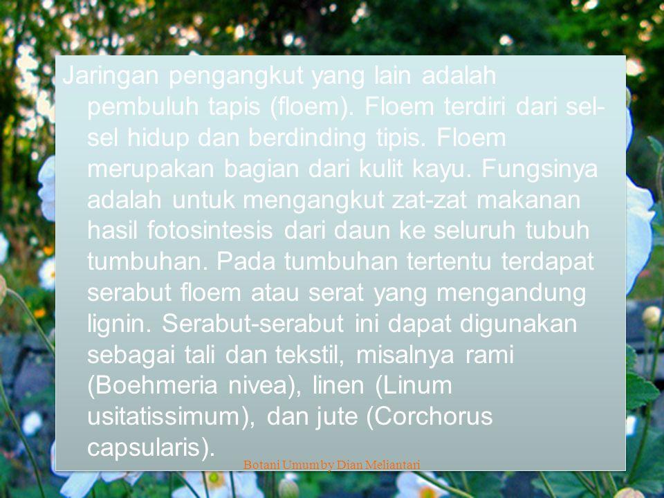 XYLEM Botani Umum by Dian Meliantari