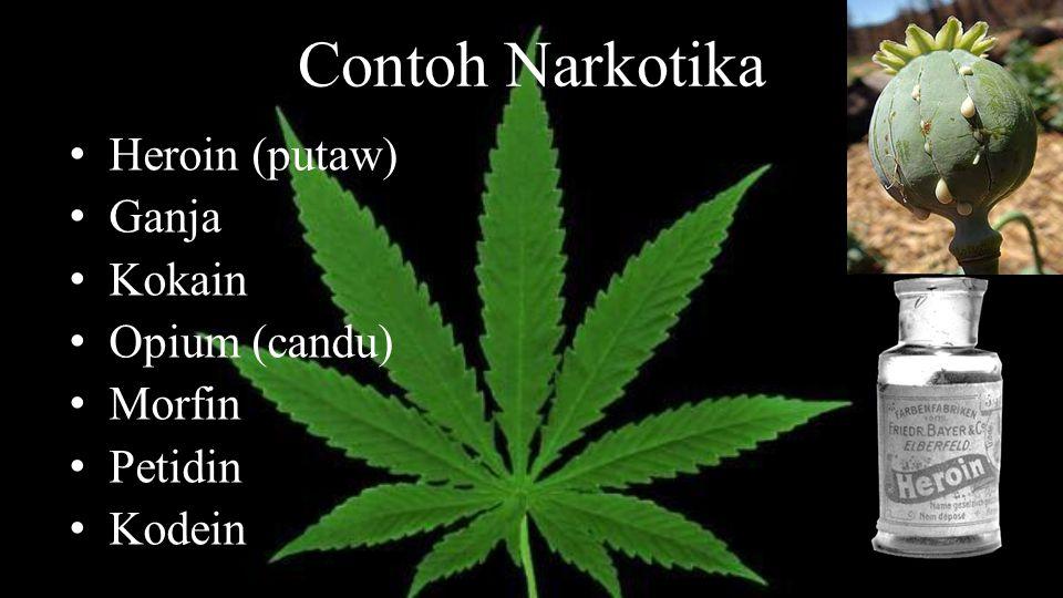 Contoh Narkotika Heroin (putaw) Ganja Kokain Opium (candu) Morfin Petidin Kodein