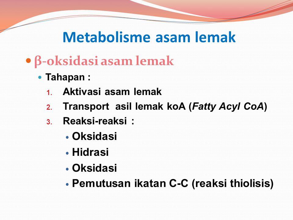 Metabolisme asam lemak β-oksidasi asam lemak Tahapan : 1. Aktivasi asam lemak 2. Transport asil lemak koA (Fatty Acyl CoA) 3. Reaksi-reaksi : Oksidasi