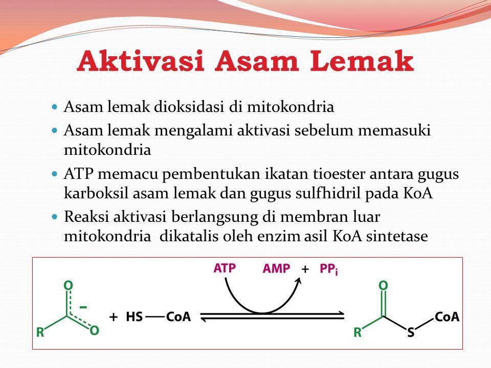 Aktivasi Asam Lemak Asam lemak dioksidasi di mitokondria Asam lemak mengalami aktivasi sebelum memasuki mitokondria ATP memacu pembentukan ikatan tioe