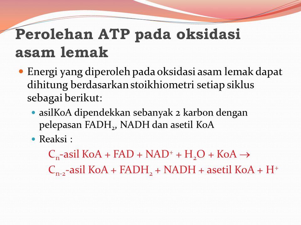 Perolehan ATP pada oksidasi asam lemak Energi yang diperoleh pada oksidasi asam lemak dapat dihitung berdasarkan stoikhiometri setiap siklus sebagai b