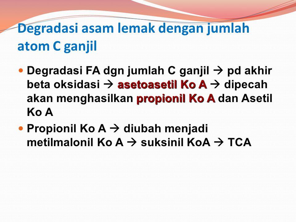 Degradasi asam lemak dengan jumlah atom C ganjil asetoasetil Ko A propionil Ko A Degradasi FA dgn jumlah C ganjil  pd akhir beta oksidasi  asetoaset