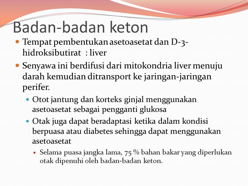 Badan-badan keton Tempat pembentukan asetoasetat dan D-3- hidroksibutirat : liver Senyawa ini berdifusi dari mitokondria liver menuju darah kemudian d