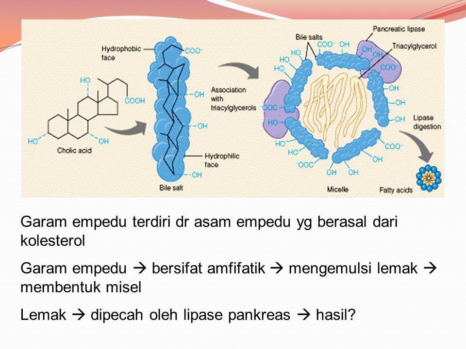 Aktivasi Asam Lemak Asam lemak dioksidasi di mitokondria Asam lemak mengalami aktivasi sebelum memasuki mitokondria ATP memacu pembentukan ikatan tioester antara gugus karboksil asam lemak dan gugus sulfhidril pada KoA Reaksi aktivasi berlangsung di membran luar mitokondria dikatalis oleh enzim asil KoA sintetase