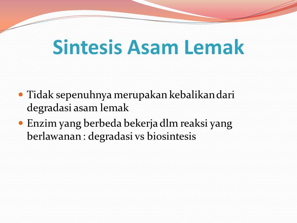 Sintesis Asam Lemak Tidak sepenuhnya merupakan kebalikan dari degradasi asam lemak Enzim yang berbeda bekerja dlm reaksi yang berlawanan : degradasi v