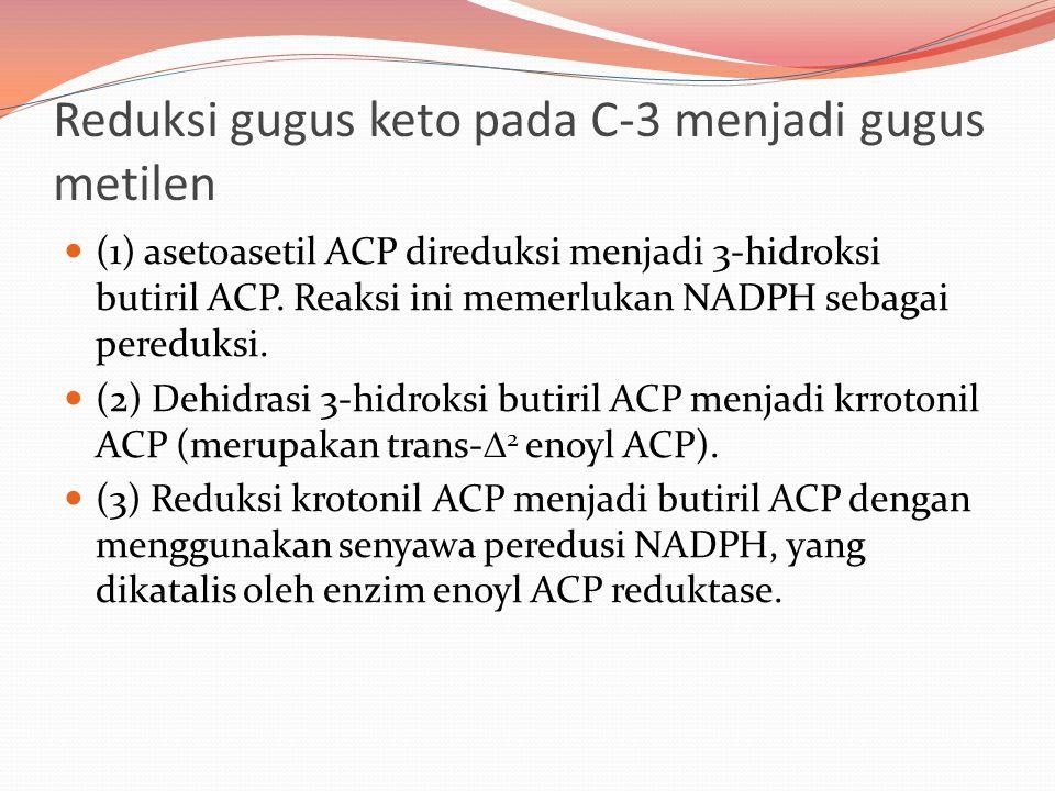 Reduksi gugus keto pada C-3 menjadi gugus metilen (1) asetoasetil ACP direduksi menjadi 3-hidroksi butiril ACP. Reaksi ini memerlukan NADPH sebagai pe