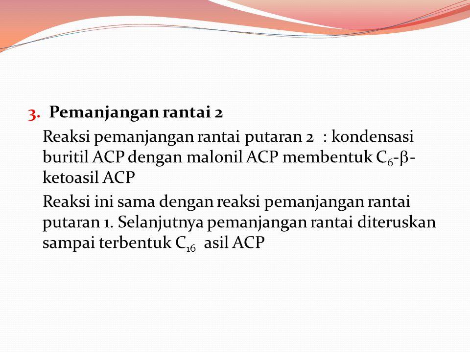 3. Pemanjangan rantai 2 Reaksi pemanjangan rantai putaran 2 : kondensasi buritil ACP dengan malonil ACP membentuk C 6 -  - ketoasil ACP Reaksi ini sa