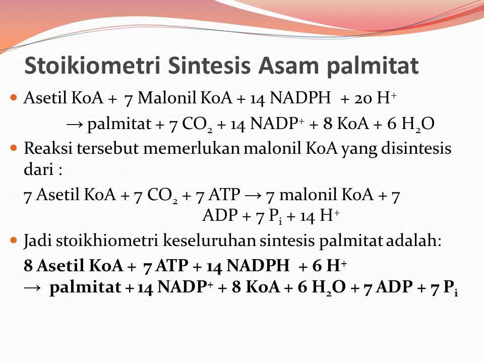 Stoikiometri Sintesis Asam palmitat Asetil KoA + 7 Malonil KoA + 14 NADPH + 20 H + → palmitat + 7 CO 2 + 14 NADP + + 8 KoA + 6 H 2 O Reaksi tersebut m