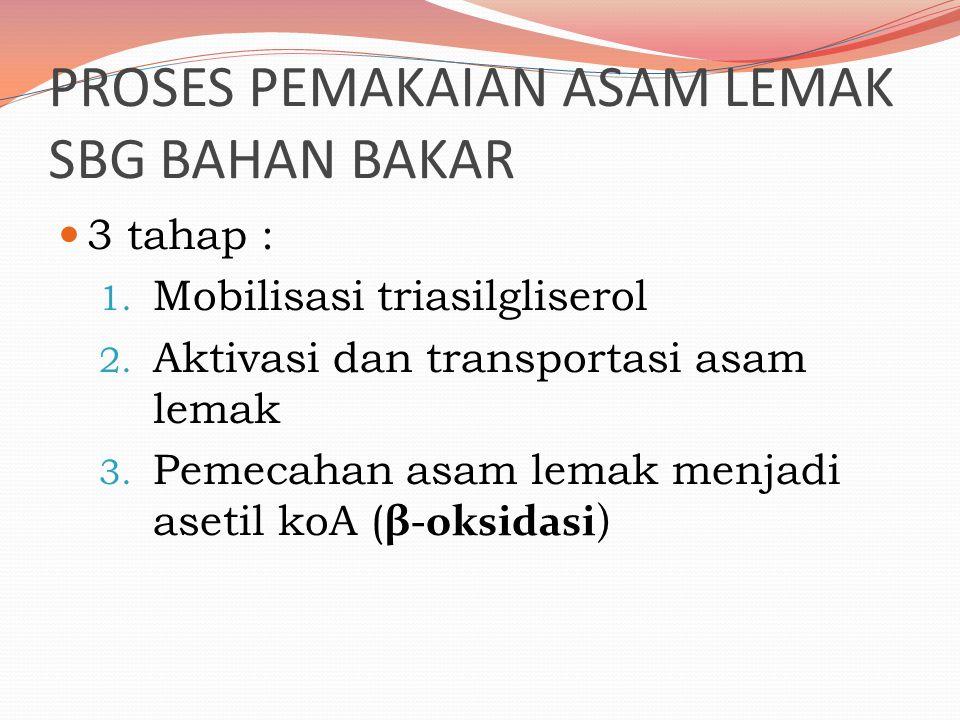 Sintesis Asam Lemak Sintesis Asam lemak  pada eukariotik dan prokariotik : sama 3 langkah Biosintesis terdiri dari 3 langkah : Biosintesis asam lemak dari asetil CoA (di sitosol) Pemanjangan rantai asam lemak (di mitokondria & ER) Desaturasi (di ER) Biosintesis as lemak  malonil Co A membutuhkan malonil Co A sebagai substrat Diperlukan ATP Reaksi biosintesis asam palmitat: Dari 8 acetyl-CoA diperlukan  7 ATP +14 NADPH fatty acid synthase Enzim untuk sintesis asam lemak : komplek fatty acid synthase