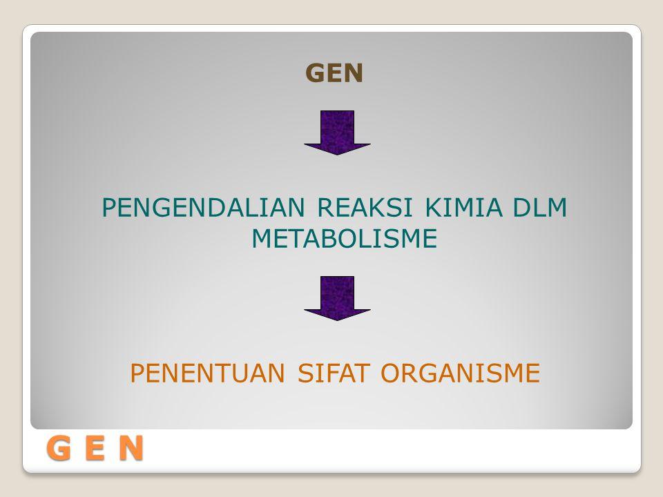 G E N PENGENDALIAN REAKSI KIMIA DLM METABOLISME PENENTUAN SIFAT ORGANISME