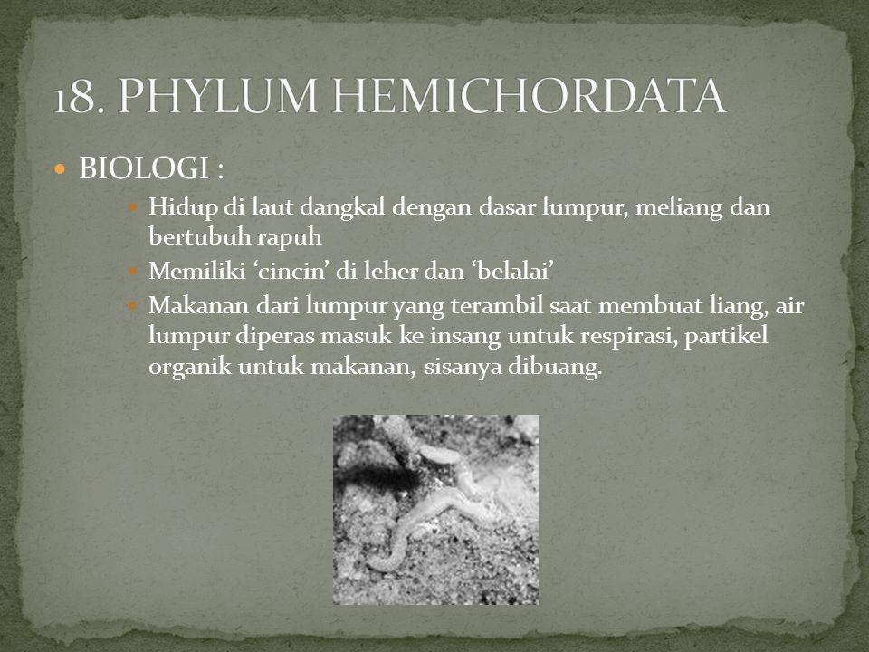 BIOLOGI : Hidup di laut dangkal dengan dasar lumpur, meliang dan bertubuh rapuh Memiliki 'cincin' di leher dan 'belalai' Makanan dari lumpur yang tera