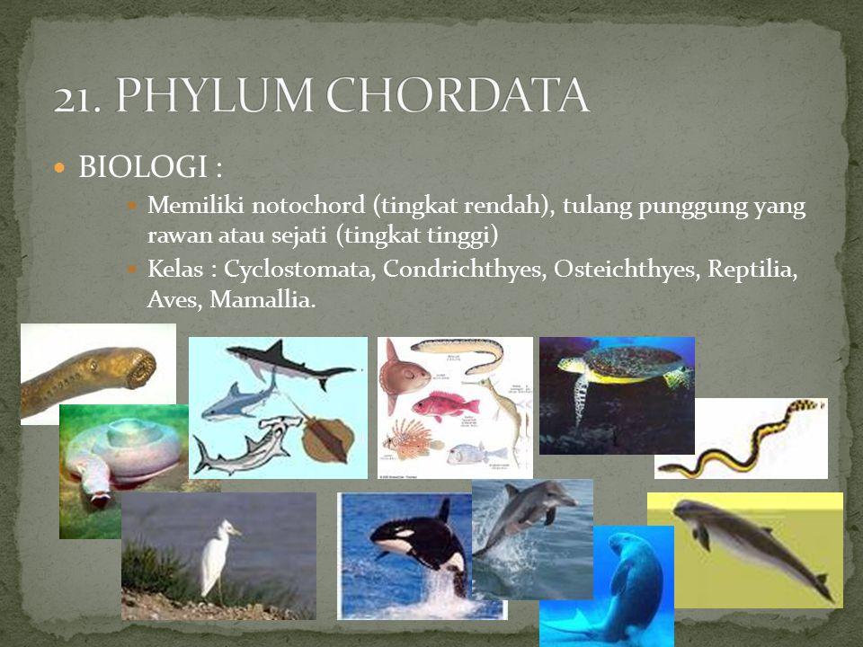 BIOLOGI : Memiliki notochord (tingkat rendah), tulang punggung yang rawan atau sejati (tingkat tinggi) Kelas : Cyclostomata, Condrichthyes, Osteichthy