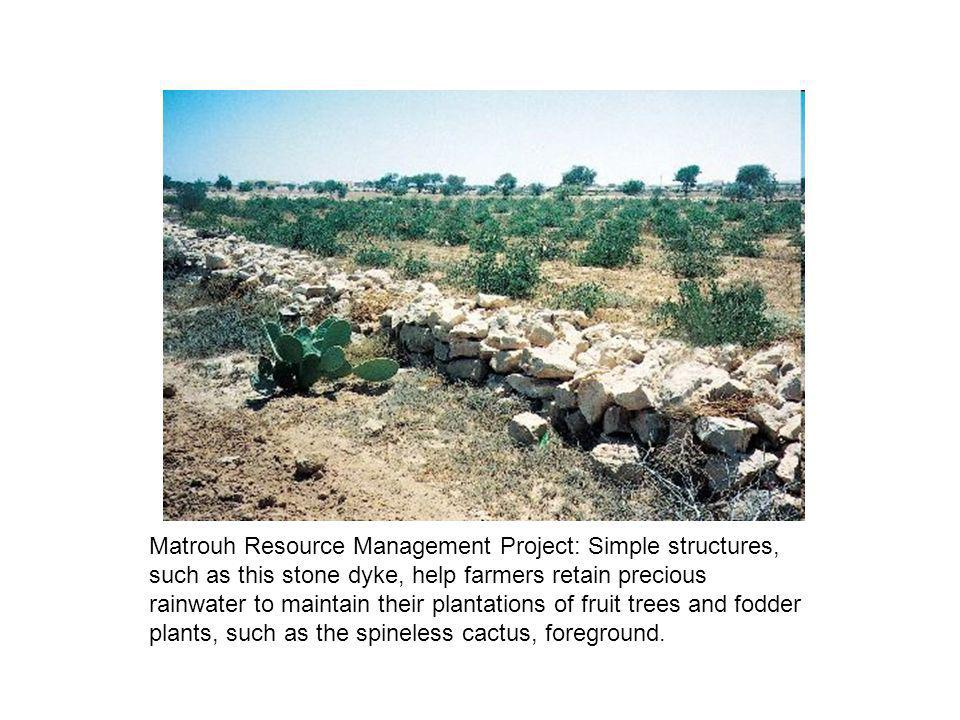 Matrouh Resource Management Project: Simple structures, such as this stone dyke, help farmers retain precious rainwater to maintain their plantations