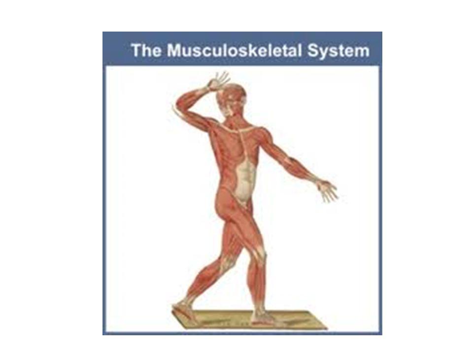 Faktor – faktor yang mempengaruhi Body Alignment 1.Status kesehatan 2.Nutrisi 3.Emosi 4.Gaya hidup 5.Perilaku dan nilai